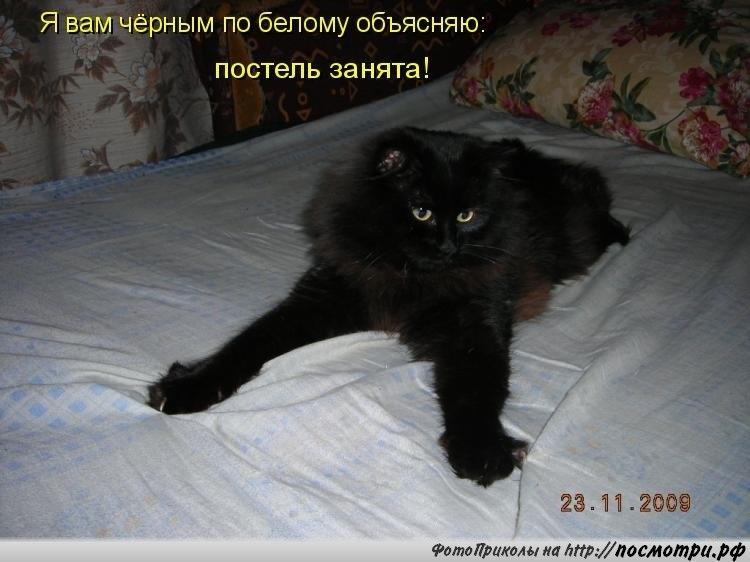 Картинки с надписями черных котов