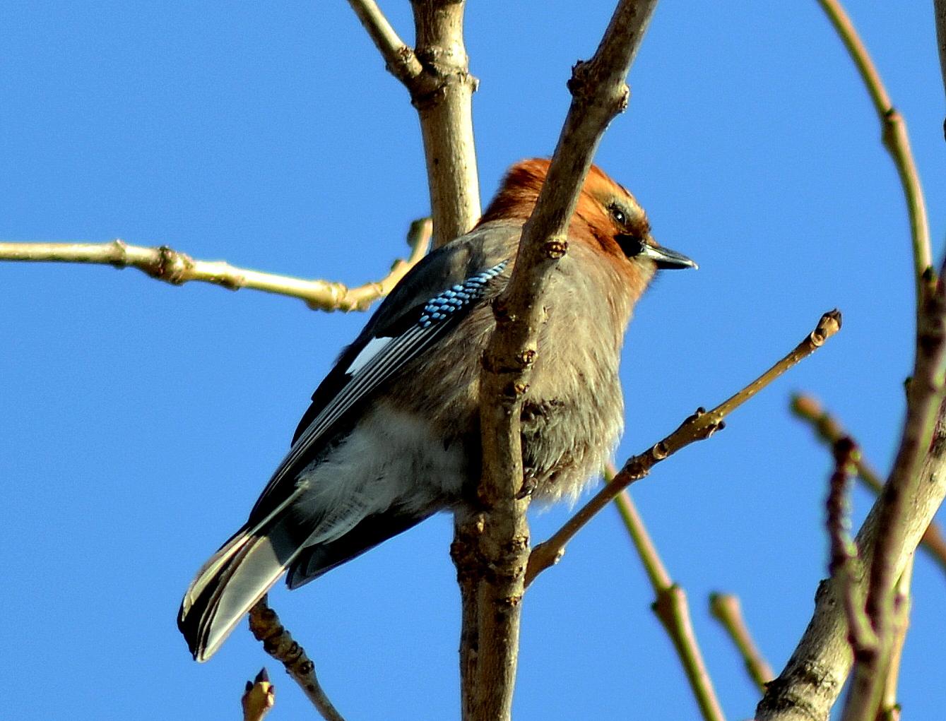 судьба, внезапное картинки птиц хабаровского края человек может